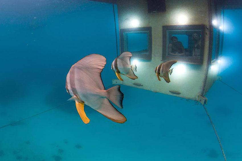 Bien-aimé The Manta Resort (Underwater Room) | Pemba island, Zanzibar  WI36
