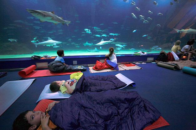 Oceanogr fic dormir au milieu des requins hotels for Hotel oceanografic ninos