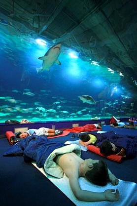 Oceanogr fic dormir au milieu des requins hotels for Aquarium insolite