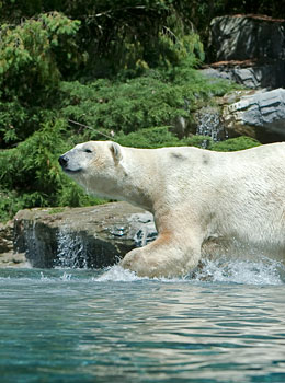 safari lodges du zoo de la fl che dormir au milieu des ours blancs des tigres et des loups. Black Bedroom Furniture Sets. Home Design Ideas