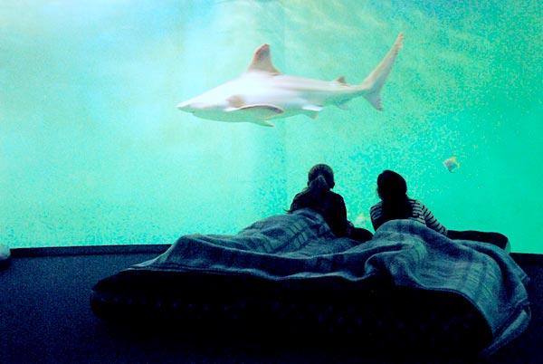 Grand aquarium de saint malo dormir au milieu des requins for Hotel insolite