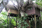 parrot nest lodge